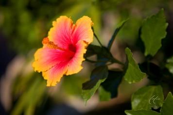 Miss Majestic Colors