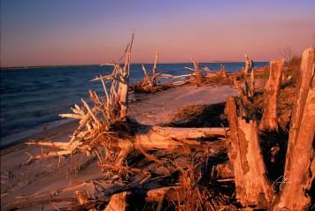 Glazed Driftwood Beach