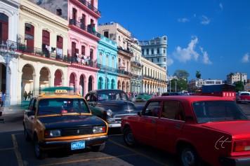 Wild About Cuba